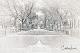Manhattan, Central Park, New York, Literary Walk, Bethesda Terrace, Shakespeare, Robert Burns, Walter Scott, American Elm, tree