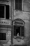 Trastevere, Rome, Italy, window, woman,