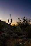 Desert Trident
