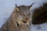 Muskoka Wildlife Reserve, Ontario