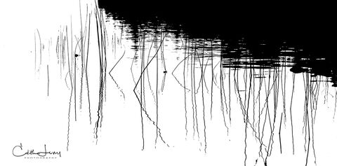 Tobermory, Ontario, reeds, abstract
