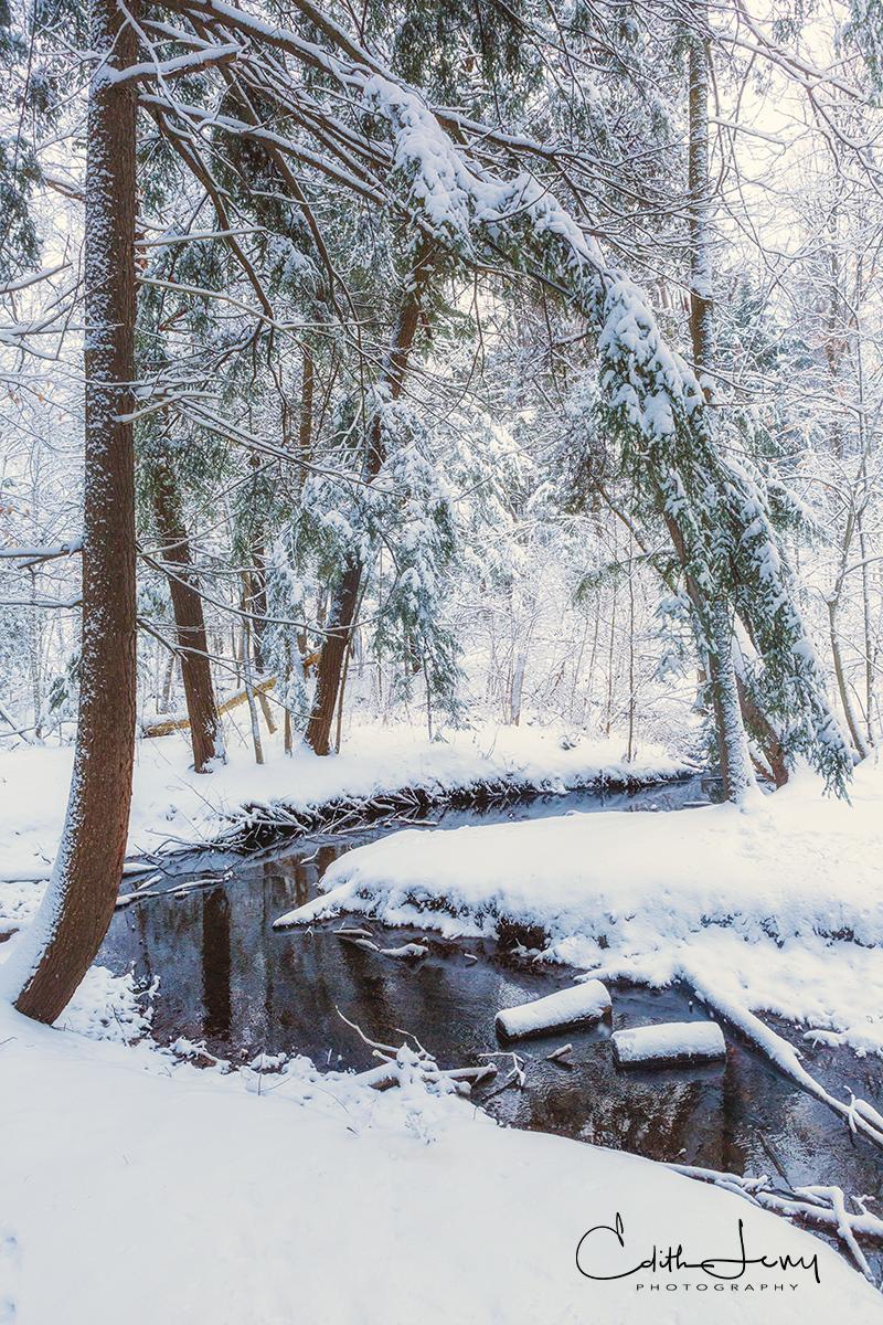Toronto, Ontario, snowfall, hiking, canopy of lace, photo