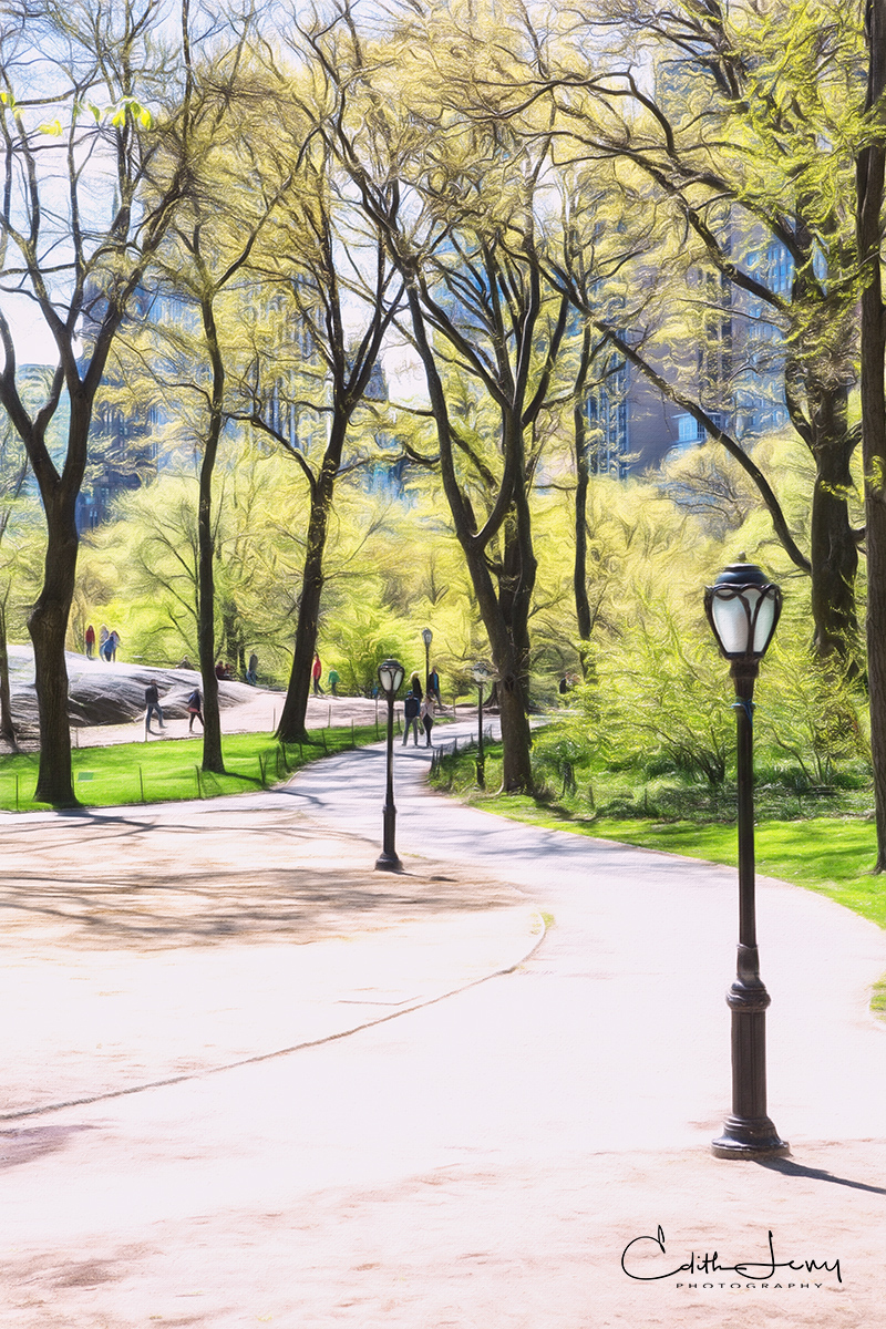One of the loveliest times of the year is spring when Central Park starts to bloom.