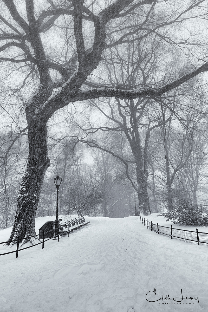 A winter storm blankets Central Park in fresh, white snow.