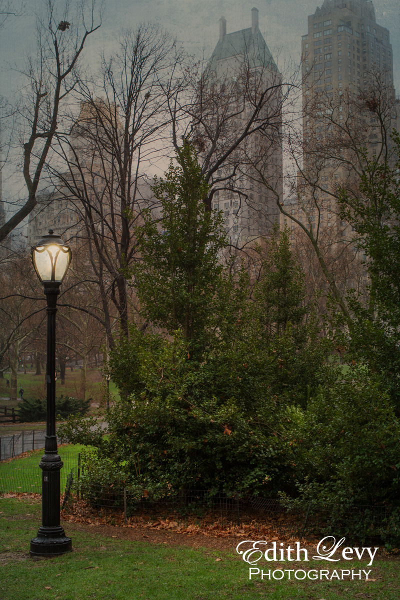 Manhattan, New York, Central Park, rain, photo