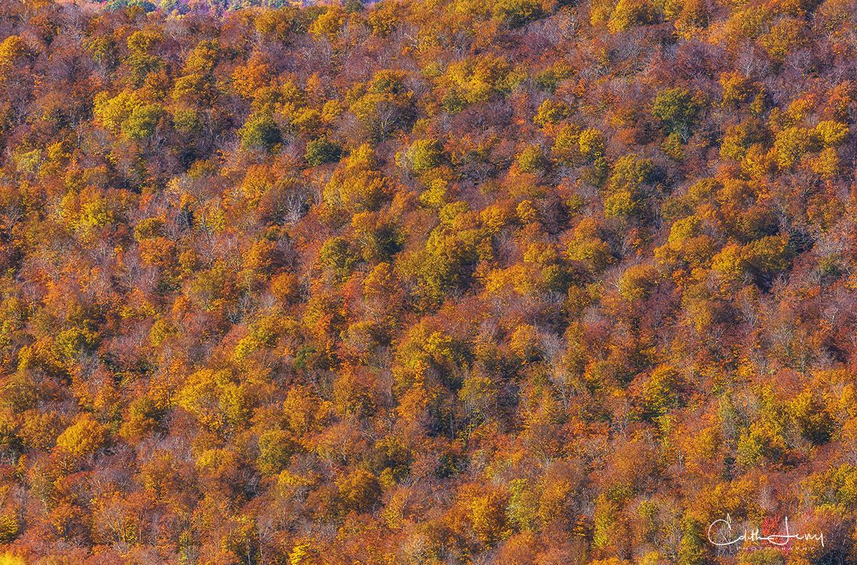 Dover, Vermont, fall, pond, mountain, Mount Snow, Hogback Mountain, golden, red, orange, photo