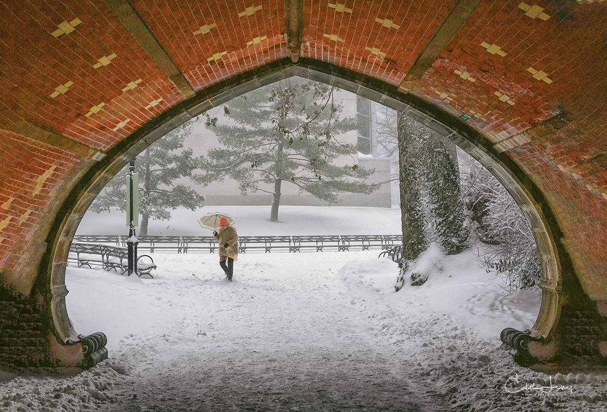 Central Park, Manhattan, New York, snow storm, cyclone bomb, bridge, photo